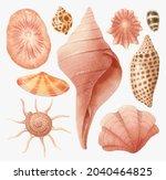 set of shell watercolor hand...   Shutterstock . vector #2040464825