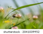 A Selective Focus Shot Of A Bee ...