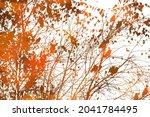a tree with flying orange birds.... | Shutterstock .eps vector #2041784495