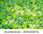 Green floating water lettuce - stock photo