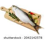 Fresh Indo Pacific Tarpon Fish...