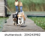 Two Adorable Dogs Running On...