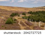 Small Hiking Trail In The...