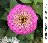 macro photo pink aster flower.... | Shutterstock . vector #2043358712