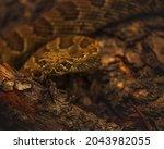 Prairie Rattlesnake Along...