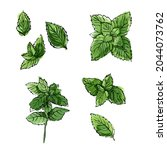 mint leaves herbs drawing... | Shutterstock . vector #2044073762