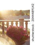 Petunia Flowers And Sun Glare....