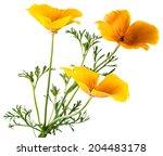 Flower Eschscholzia Californic...