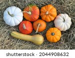 squashes and pumpkins on straw. ...   Shutterstock . vector #2044908632