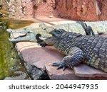 Crocodile Farm.  Two Crocodiles ...