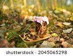 Dried Mushrooms In Aglass Jar...
