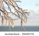 Branch In Ice By The Sea