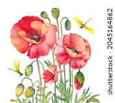 red poppy flowers and...   Shutterstock . vector #2045164862