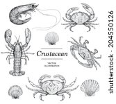 Crustacean Vector illustrations - stock vector