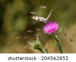 Small photo of a lot of little bugs attacking the butterfly on a thorn, symbolic meaning
