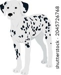 dalmatian dog breed vector pet    Shutterstock .eps vector #2045726768