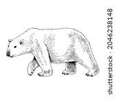 white arctic polar bear hand... | Shutterstock .eps vector #2046238148