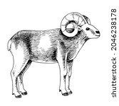 hand drawn mouflon  sketch... | Shutterstock .eps vector #2046238178