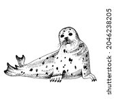 hand drawn seal isolated on... | Shutterstock .eps vector #2046238205