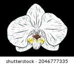 orchid flower sketch....   Shutterstock .eps vector #2046777335