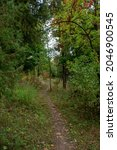 Small photo of autumn colorful park. bushes and trees with yellow and green leaves. a path is trodden in the middle.