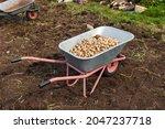 Garden Wheelbarrow With A Crop...