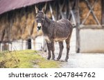 Small photo of One of the most stubborn animals on the farm was the donkey that didn't want to come in the barn when it started raining.