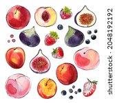 fig fruit sketch of food in... | Shutterstock . vector #2048192192