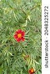 Srilankan Red Flower ...