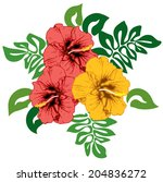 hibiscus flowers with leaves ... | Shutterstock .eps vector #204836272