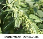 Flowers On Nettle