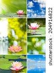 different beautiful flowers   Shutterstock . vector #204916822