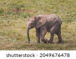 cute baby elephant walking ... | Shutterstock . vector #2049676478