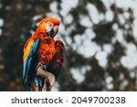 parrot ara  close up view of... | Shutterstock . vector #2049700238