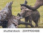 cute baby elephant walking in... | Shutterstock . vector #2049900488