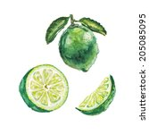 watercolor lime set | Shutterstock . vector #205085095