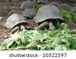 Turtles Eating At La Digue Par...