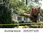 uprooted tree fell on a house... | Shutterstock . vector #205297105
