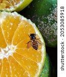 Close Up Of Orange Fruit Being...