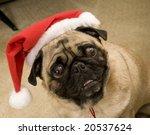 christmas pug | Shutterstock . vector #20537624