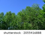edge of forest with trees with... | Shutterstock . vector #2055416888