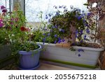 small potted garden on the... | Shutterstock . vector #2055675218
