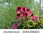 pretty bright pink flowers of... | Shutterstock . vector #2056308602