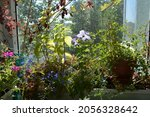balcony greening with different ... | Shutterstock . vector #2056328642