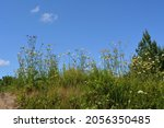meadow in sunny summer day.... | Shutterstock . vector #2056350485