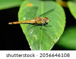 Close Up Of A Yellow Dragonfly...