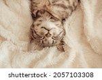 cute little grey kitten sleeps... | Shutterstock . vector #2057103308