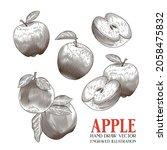 apple hand draw vector ... | Shutterstock .eps vector #2058475832