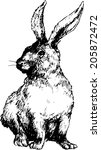 Hand Drawn Rabbit
