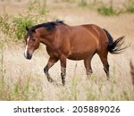 Brown Horse Walking In The...